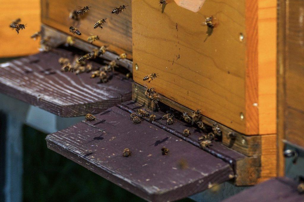 beehive, hive, honey bees