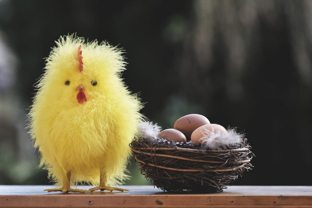chicken, chicks, easter
